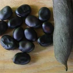Puffbohne Schwarzsamige
