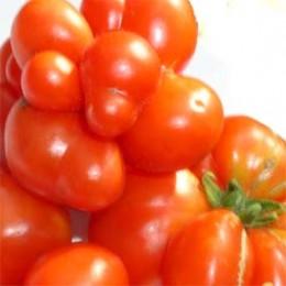 Salattomate Reisetomate