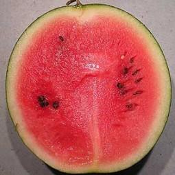 Wassermelone Sugar Baby