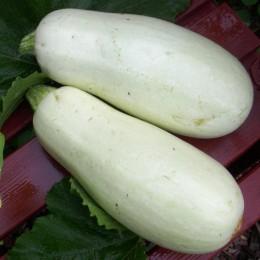 Zucchini White Bush
