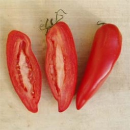 Marktomate Rote Spitzel