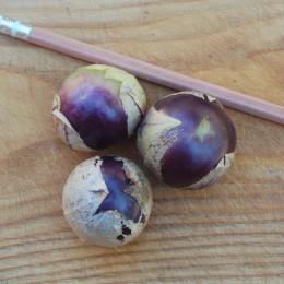 Tomatillo Purple de Milpa