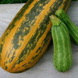 Öl-Zucchini Arenborner Walze