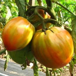 Fleischtomate Ochsenherz Rot (Cuor di bue)