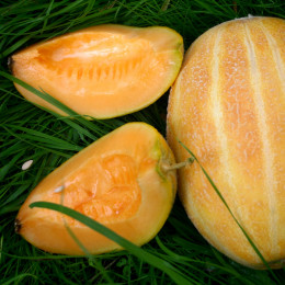 Honigmelone Blenheim Orange