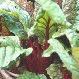 Mangold Rhubarb Chard