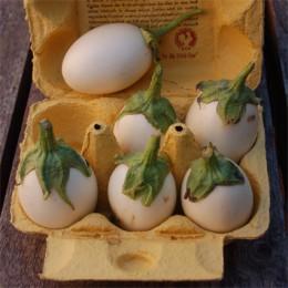 Aubergine Blanche ronde à œuf (Eierfrucht)