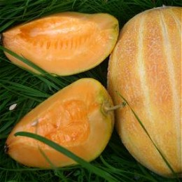 Honigmelone Blenheim Orange