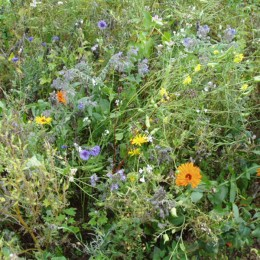 Schönhagener Bienenweide